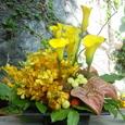 明るい黄色のアレンジメント (カラー、モカラなど)9月下旬