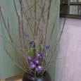 朴の木とアイリス 3月初旬