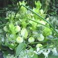 御霊前に クルクマ(グリーン)、ピンポンマム(白スプレー咲き)、クレマチス(ヘアー)など 9月下旬