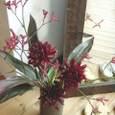 ダリア(黒蝶)、カンガルーポー、赤ドラセナ 5月中旬