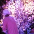 日野美歌さん 「桜ライヴ 2007」 その1 4月初め