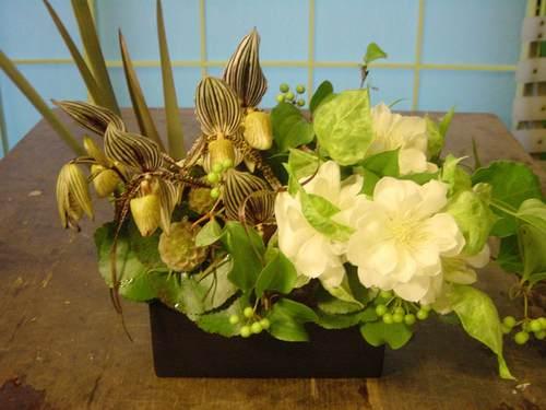 パフィオペディラムと八重咲きのクレマチスなど 5月下旬