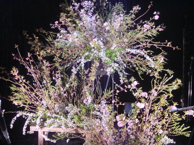 日野美歌さん桜ライヴ 南青山「MANDALA」にて 4月初旬