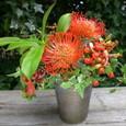 食中植物(ネペンテス)を使ったアレンジメント 9月下旬