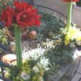 洋風門松 アマリリスと葉牡丹など 12月末