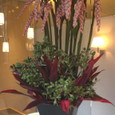 ゲットーの花、マニラヤシの実、赤ドラセナなど 4月中旬