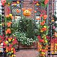「西洋館ハロウィン装飾」岩崎ミュージアムにて 10月下旬