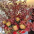 ヒペリカム(紅葉)、ピンクッションなど 11月下旬
