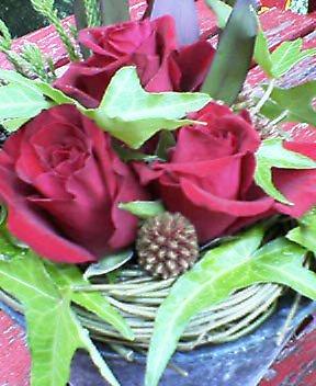 赤バラとシッサス、アイビー 6月中旬