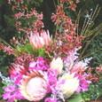 プロテア(白、ピンク)、ワイルドキャット、モカラなどのアレンジメント