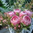 ネイティブフラワー(クイーンプロテア、ワックスフラワー、リューカデンドロン、ユーカリ)を使った美容院の祝い花