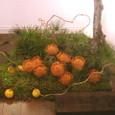 今井アレクサンドルさん「赤富士」展のための和風庭園(ピンクッションを使って) ギャラリー「あいおらいと」にて
