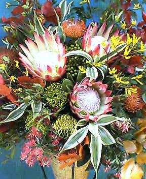 ワイルドフラワー(キングプロテア)の開店花
