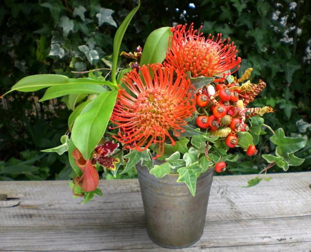 ピンクッション、食中植物(ネペンテス)を使ったアレンジメント