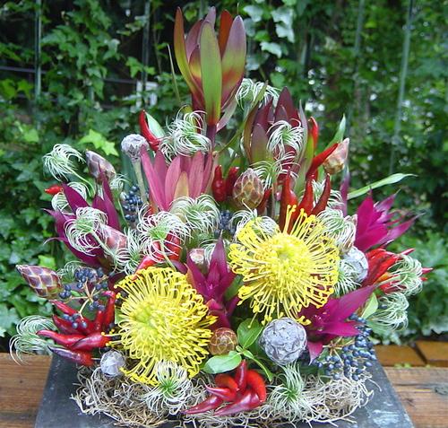 ネイティブ・フラワーの開院祝いのアレンジメント(ピンクッション、リューカデンドロンなど)