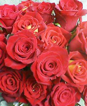 還暦祝い、赤バラのブーケ